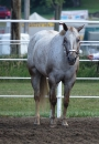 Mac's Charming Diva, POA Mare for sale in Nebraska