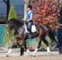 Das Apollo, Oldenburg Gelding for sale in Washington