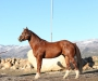 Watch Ima Silky Jack, American Quarter Horse Stallion at Stud in Utah