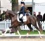 Callaho's Benicio Semen for Sale- 2 Doses (Yancey Farms), Hanoverian Stallion at Stud in Pennsylvania