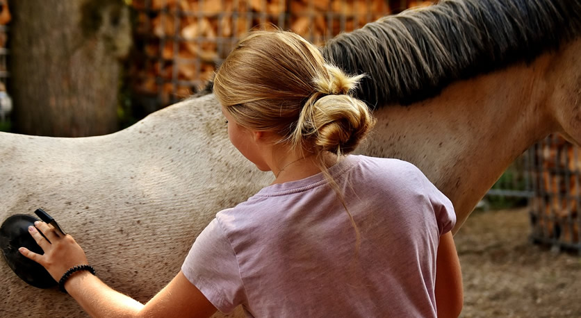 Equine Emergency Tips