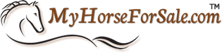 Hackney Ponies & Horses for sale
