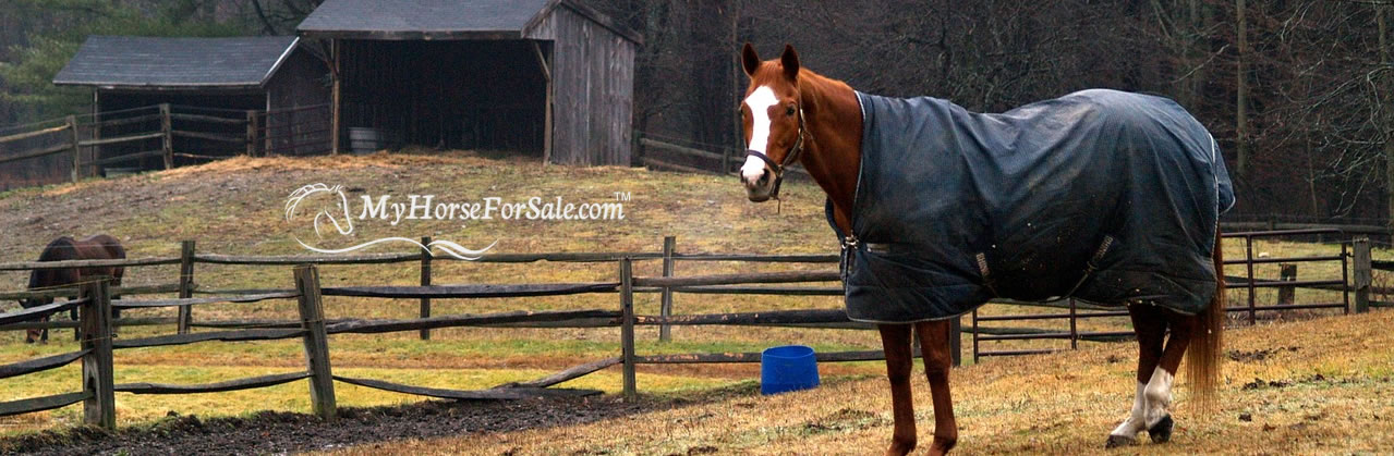 Should You Blanket Your Horses In Winter?