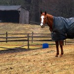 horse blankets for winter