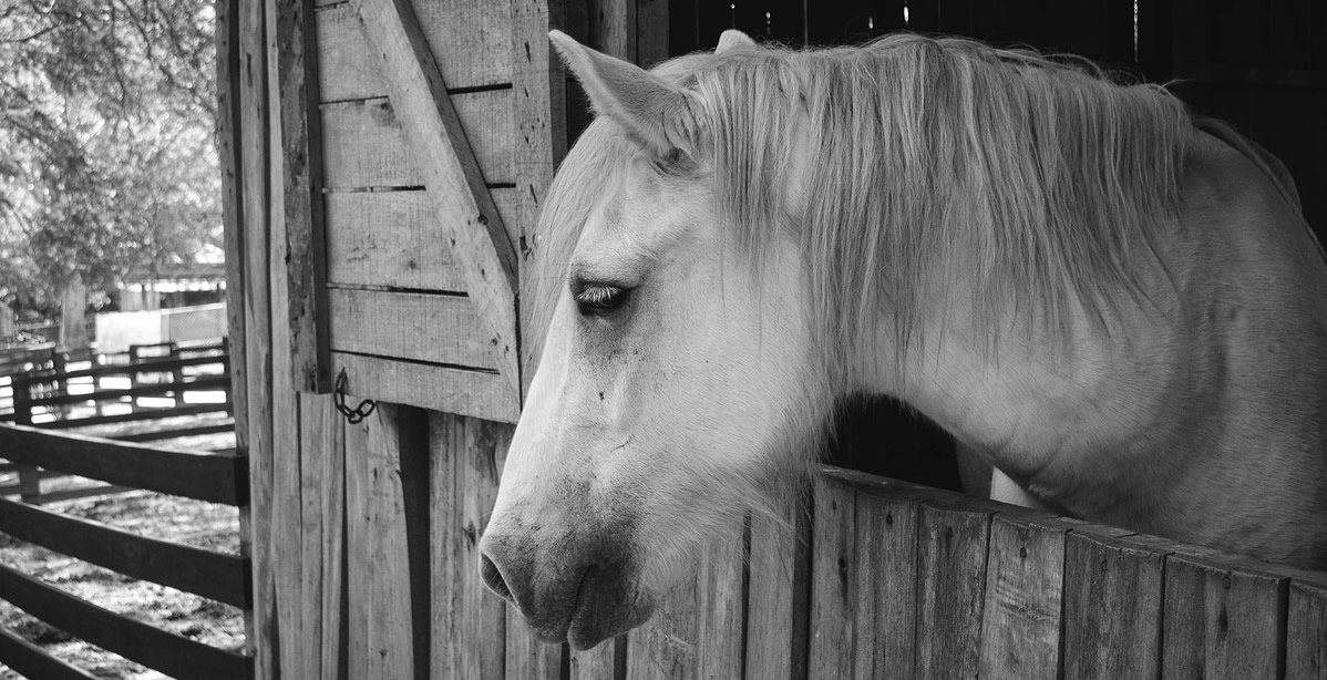 5 Warning Signs Your Horse Is Sick