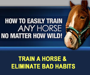 Horse Training Secrets