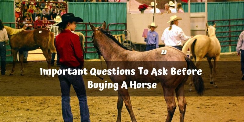 12 Important Questions To Ask Before Buying A Horse