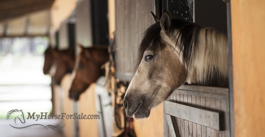 Horse Boarding Facilities: All You Need To Know