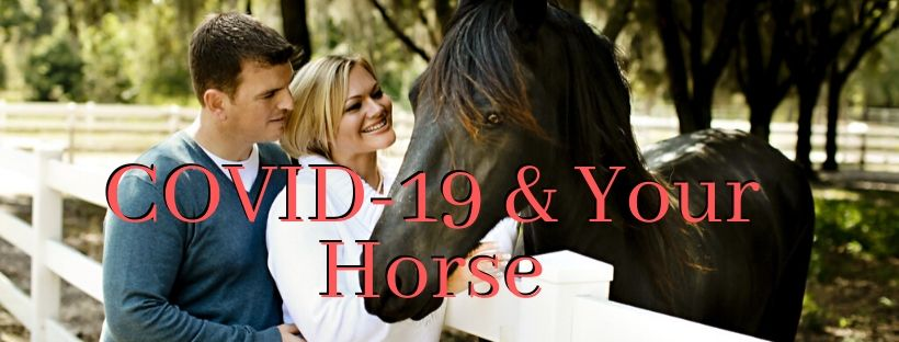 Coronavirus (COVID-19) And Your Horse: What You Need To Know