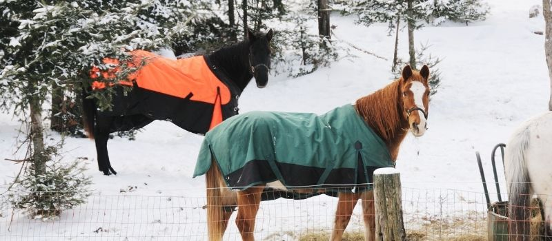 10 Ways To Care For Your Horse In Winter