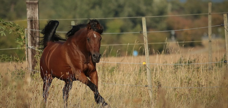 The Arabian Horse Breed: 12 Things You Didn't Know